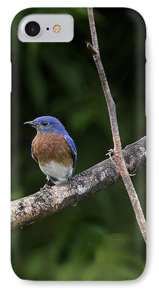 Eastern Blue Delight Phone Case by Cris Hayes