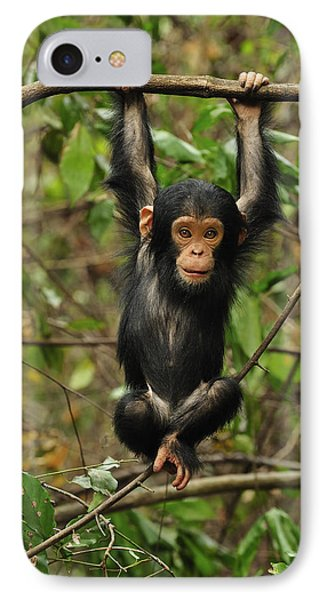 Eastern Chimpanzee Baby Hanging IPhone Case by Thomas Marent