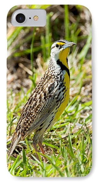 Eastern Meadowlark IPhone Case by Anthony Mercieca