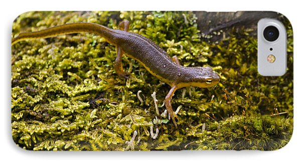 Eastern Newt Aquatic Adult IPhone 7 Case by Christina Rollo