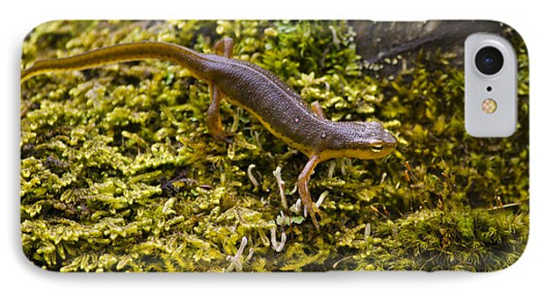 Eastern Newt Aquatic Adult IPhone Case by Christina Rollo