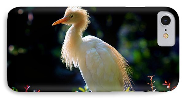 Egret With Back Lighting IPhone Case by Zoe Ferrie