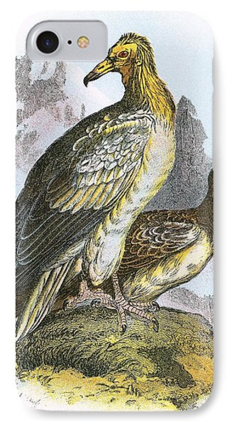 Egyptian Vulture IPhone Case by English School