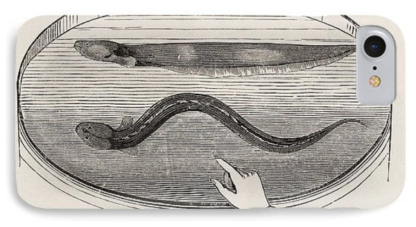 Electric Eel In A Tank Of Water IPhone Case by King's College London