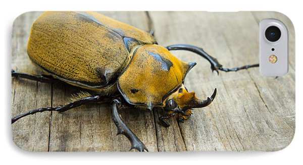 Elephant Beetle IPhone Case by Aged Pixel