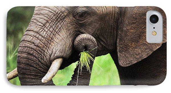 Elephant Eating Close-up IPhone Case by Johan Swanepoel