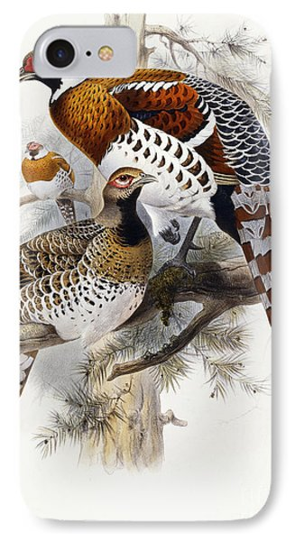 Elliot's Pheasant IPhone 7 Case by Joseph Wolf