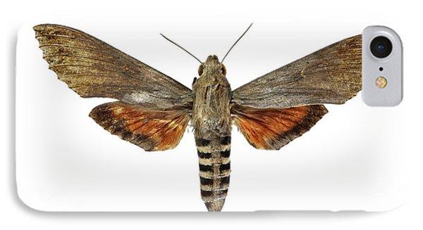 Ello Sphinx Moth IPhone Case by F. Martinez Clavel