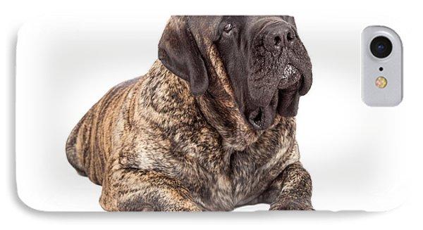 English Mastiff Dog Laying Head Tilted IPhone Case by Susan Schmitz
