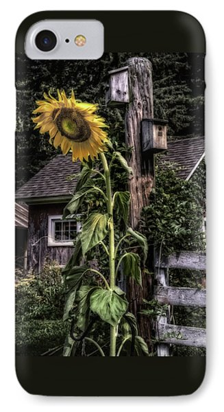 Sunflower Country IPhone Case by Thomas Schoeller