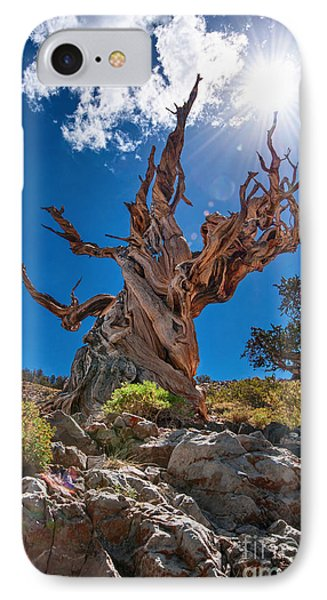 Eternity - Dramatic View Of The Ancient Bristlecone Pine Tree With Sun Burst. IPhone Case by Jamie Pham