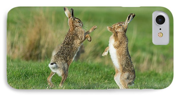 European Hares In March IPhone Case by Dr P. Marazzi