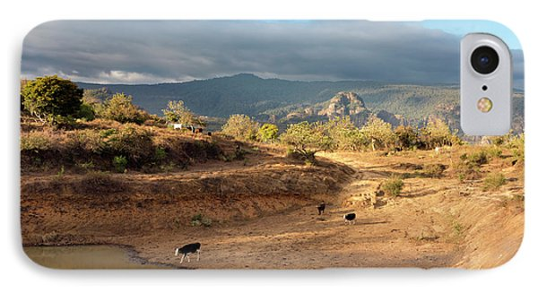 Extensive Cow Farming With Water Hole IPhone Case by Daniel Sambraus