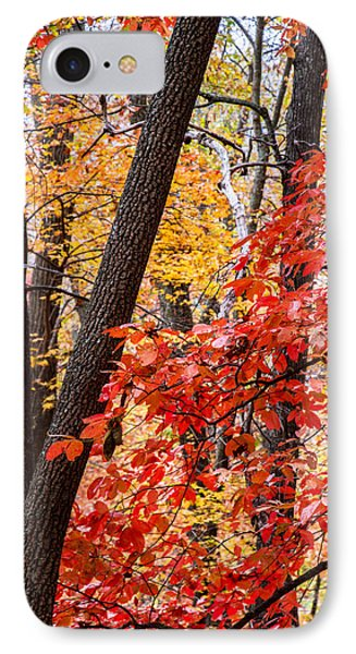 Fall In The Forest Phone Case by John Haldane