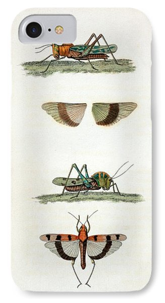 Field Crickets IPhone 7 Case by General Research Division/new York Public Library