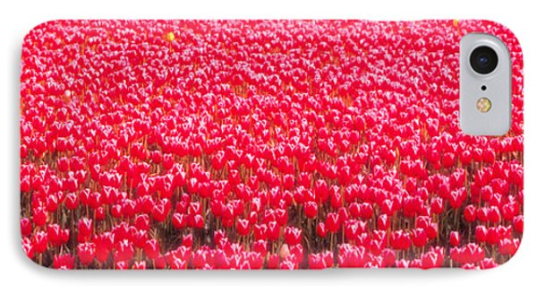 Fields Of Tulips Alkmaar Vicinity IPhone Case by Panoramic Images