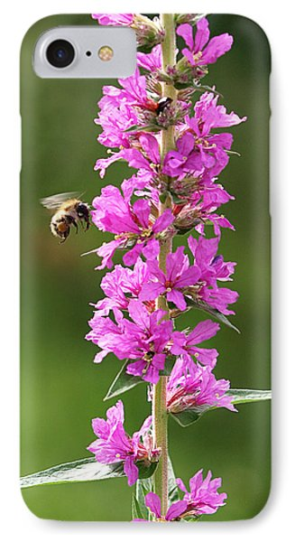 Final Approach - Bee On Purple Loosestrife IPhone Case by Gill Billington