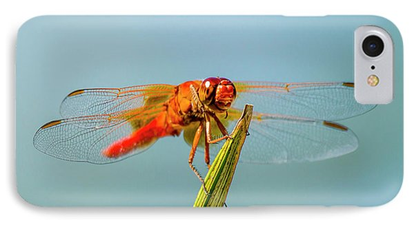 Flame Skimmer Dragonfly Drying IPhone Case by Michael Qualls