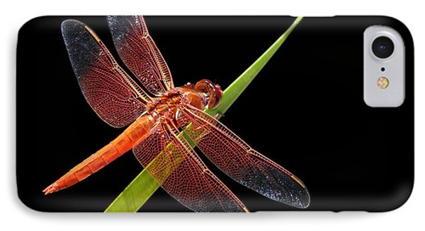 Flame Skimmer - Dragonfly IPhone Case by Nikolyn McDonald