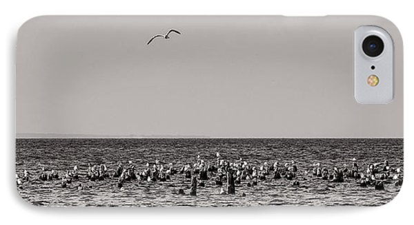 Flock Of Seagulls In Black And White IPhone Case by Sebastian Musial