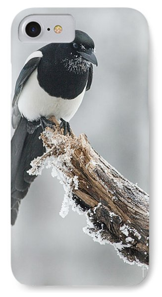 Frosted Magpie IPhone 7 Case by Tim Grams