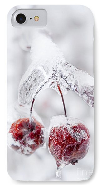 Frozen Crab Apples On Icy Branch IPhone Case by Elena Elisseeva