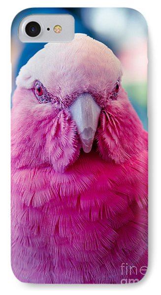 Galah - Eolophus Roseicapilla - Pink And Grey - Roseate Cockatoo Maui Hawaii IPhone 7 Case by Sharon Mau