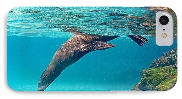 Galapagos Sea Lion Zalophus Wollebaeki IPhone Case by Panoramic Images