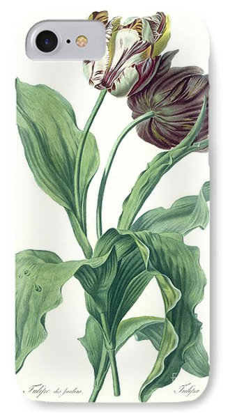 Garden Tulip IPhone Case by Gerard van Spaendonck