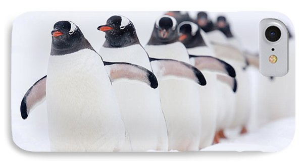 Gentoo Penguins In Line Cuverville IPhone Case by Alex Huizinga