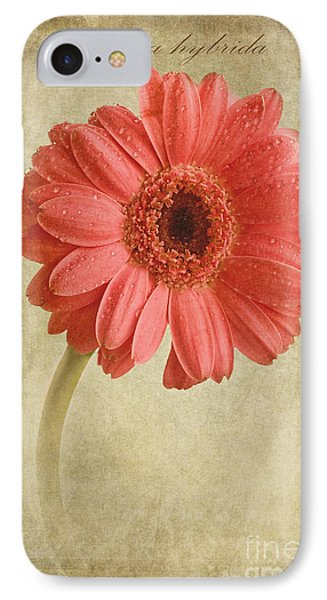 Gerbera Hybrida With Textures IPhone Case by John Edwards