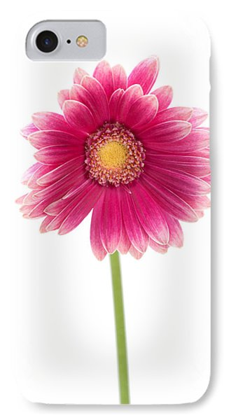 Gerbera IPhone Case by Sebastian Musial