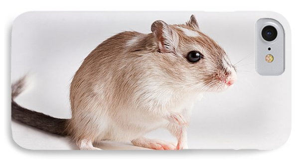 IPhone Case featuring the photograph Gerbil Gerbillinae by David Kenny
