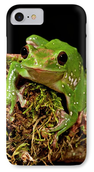 Giant Gliding Treefrog, Polypedates Sp IPhone Case by David Northcott