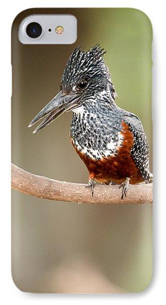 Giant Kingfisher Megaceryle Maxima IPhone Case by Panoramic Images