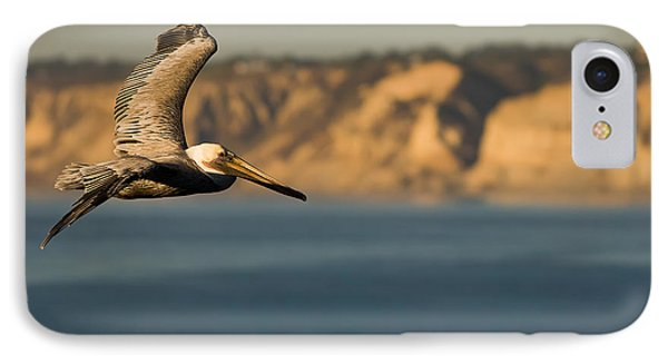 Gliding Pelican IPhone Case by Sebastian Musial