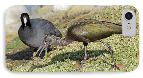 Glossy Ibis Phone Case by Shoal Hollingsworth