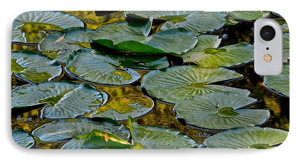 Golden Lilly Pads Phone Case by Frozen in Time Fine Art Photography