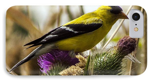 Goldfinch Atop A Purple Thistle Phone Case by Darleen Stry