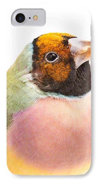 Gouldian Finch Erythrura Gouldiae IPhone Case by David Kenny