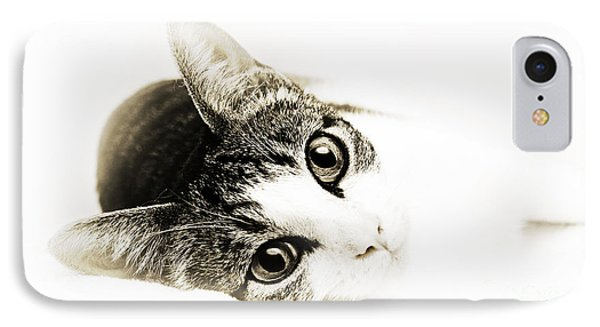 Grand Kitty Cuteness 3 High Key Phone Case by Andee Design