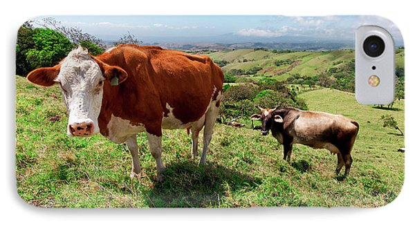 Grass Fed Cattle, Costa Rica IPhone Case by Susan Degginger