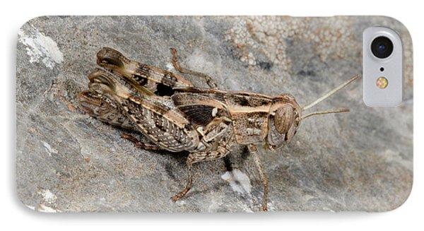 Grasshopper Calliptamus Barbarus Juvenile IPhone 7 Case by Nigel Downer
