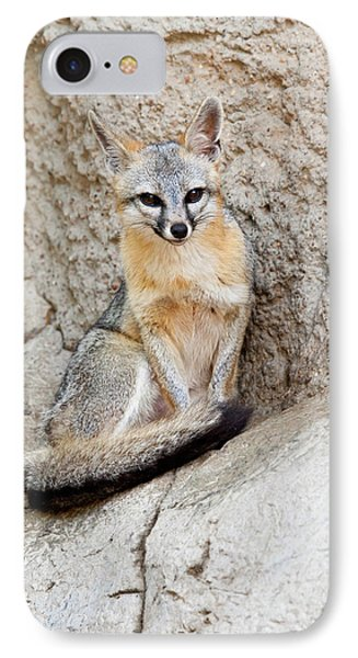 Gray Fox (urocyon Cinereoargenteus IPhone Case by Larry Ditto