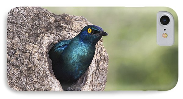 Greater Blue-eared Glossy-starling IPhone 7 Case by Andrew Schoeman