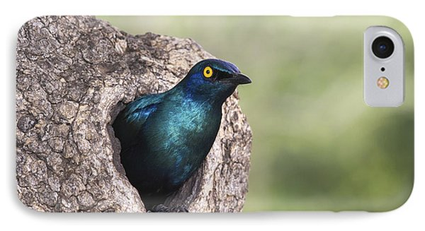 Greater Blue-eared Glossy-starling IPhone Case by Andrew Schoeman
