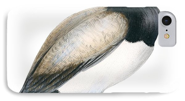 Greater Scaup IPhone Case by Anonymous