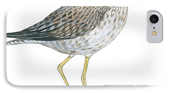 Greater Yellowlegs  Phone Case by Anonymous
