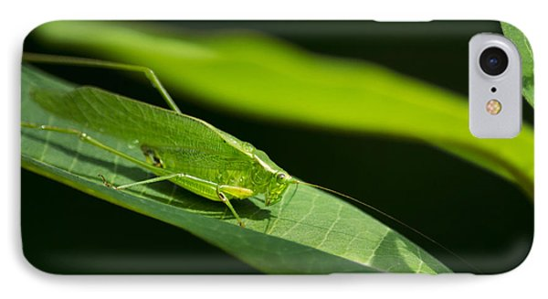 Green Katydid IPhone Case by Christina Rollo