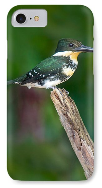 Green Kingfisher Chloroceryle IPhone Case by Panoramic Images